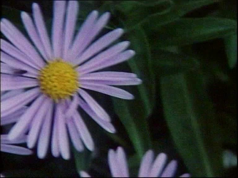 flowersandleaves